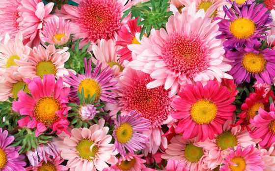 цветы, красивые, цветов, бесплатные, компьютера,