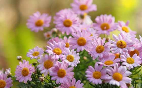 Цветы 20019