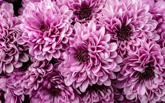 Цветы 20044