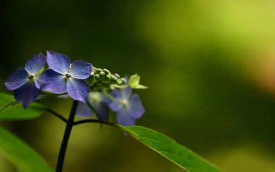 природа, макро, цветы