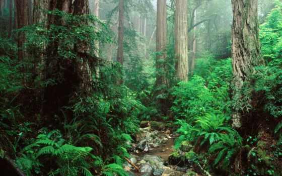 state, park, mount, tamalpais, california, redwoods, заводь, webb,