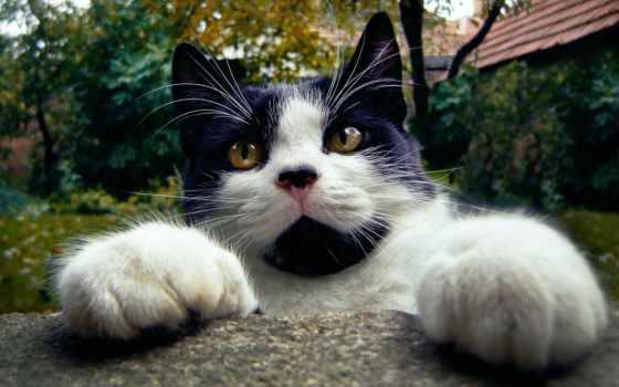 , кот, мордочка, усы, лапки, прикол,