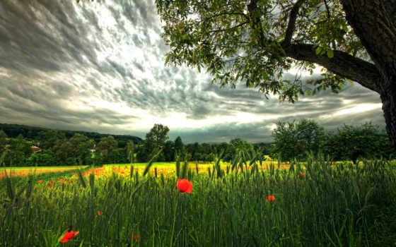 поле, красивое, природа, фантастика, небо, rye, маки,