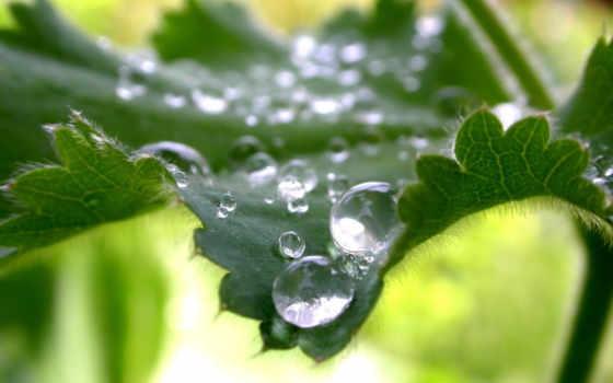 роса, росы, капли, природа, макро, листьях, full,