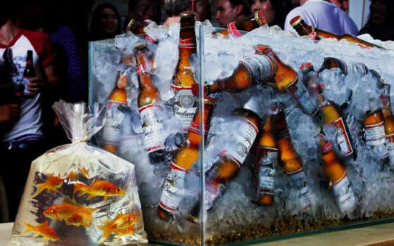 пиво, аквариум