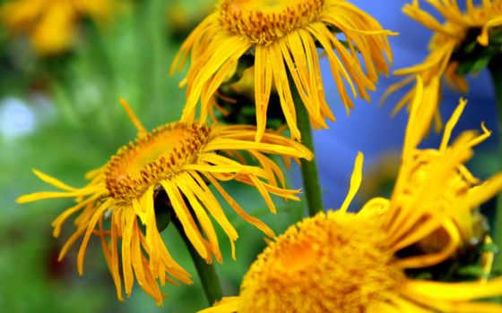 цветы Фон № 20005 разрешение 2560x1600