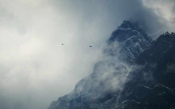 птицы, снег