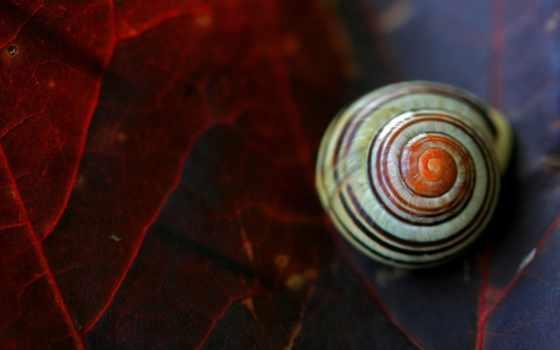 seashells, листок