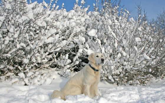 winter, собака, снег