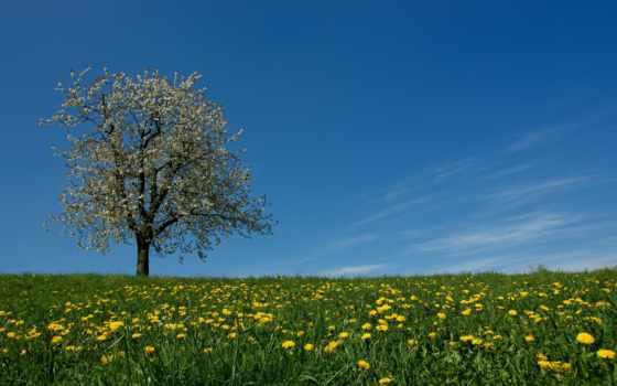 цветы, трава, луг