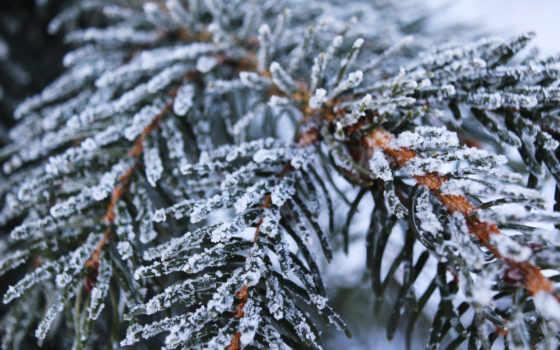 ёль, frozen, снег