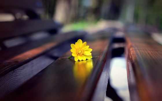 цветы, скамейке, скамейка