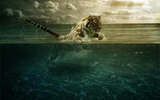 тигр, прыжок, world