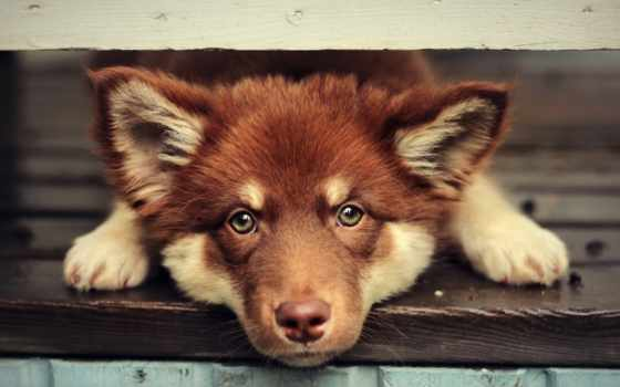 собачек, собачки, белая, мордашка, собака, собак, sweetheart, января, коллекция,