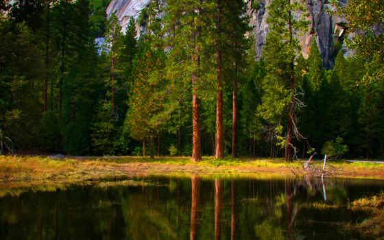 природа, trees, леса, отражение, красивые, дерево, water,