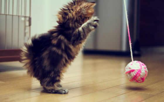 кошек, игрушки, своими, руками, кошки, сделай, country, house, сам, catscountry, кота,