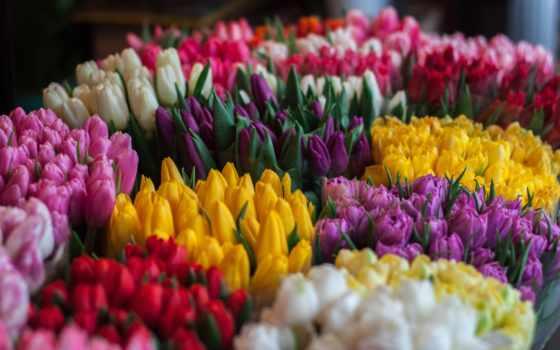 орешком, белки, one, cvety, click, листва, желтые, тюльпаны, песочница, белки,