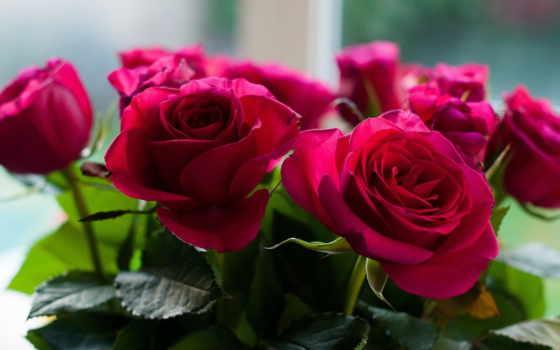 цветы, розы, букет Фон № 70960 разрешение 2048x1339