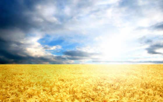 ,небо, облака,колоски,поле,