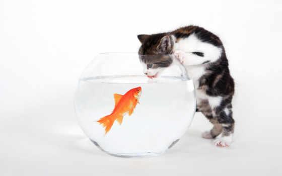 кот, funny, fish