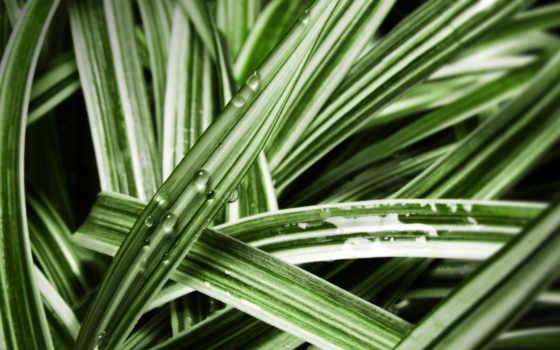 трава, cannabis, арбуз, зелёный, макро, дек, пляже, photos, мб, фон, free,