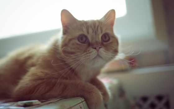desktop, red, zhivotnye, взгляд, cool, mix, кошки, картинка, кот, природой,