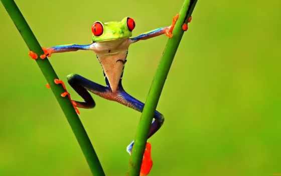 лягушки, лягушек, древолазы, сидели, листолазы, одна, zhivotnye, решила, самые, трио,