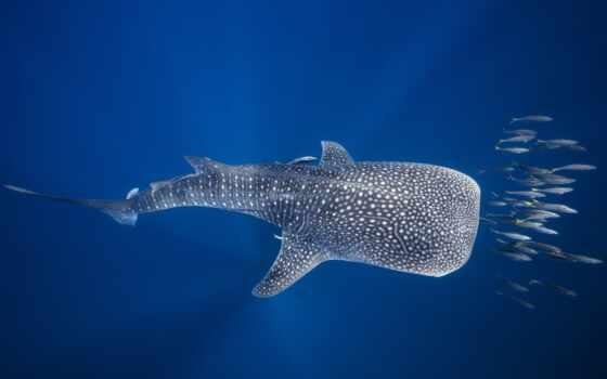 fish, водолаз, пура, под, water, вида, forward, картинка, увеличить, receive