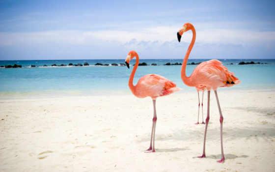 фламинго, два