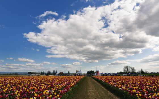 цветы, небо, тюльпаны