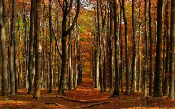 природа, леса, ручей