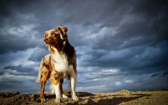 pies, chmury, burzowe, kot,