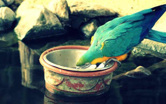 birds, голосов,