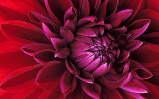 desktop, цветы, best