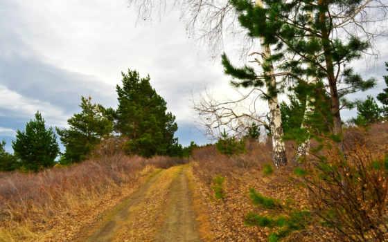 tapety, darmowe, pictures, pulpit, березы, drzewa, фото, zobacz, jesień,