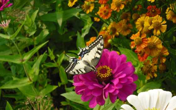 капли, бабочка, монитора, розы, cvety, бутоны,