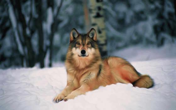 волк, одиночка, хищник, был, волки, волка, зверь, снег, обоя,