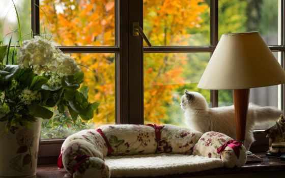 окно, осень, кошки, cvety, лампа, that, подоконник, кот, страница,