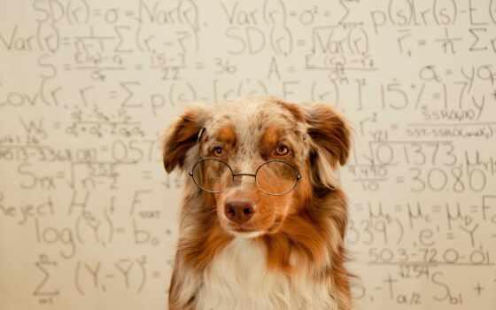 собака, самые, большие, змеи, очки, собаки, очках, рубашка,