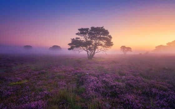 рассвет, фотограф, albert, dros, природы, туман, нидерландов, yulya, магия, heather, яndex,