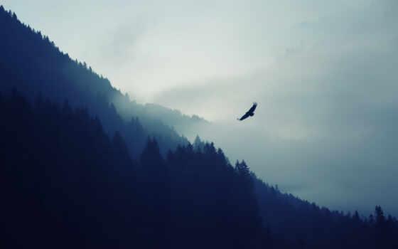 орлан, небо, туман, гора, фон