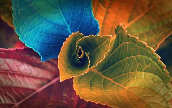 листья, colorful