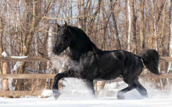 лошади, winter, снег