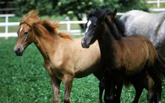 лошади, делаю, река