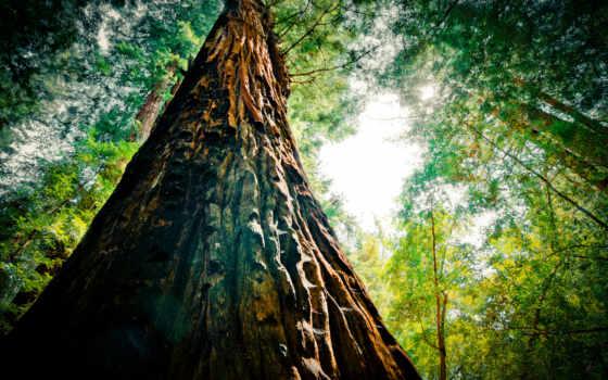 природа, full, дерево, пейзажи -, бесплатные, sparkle, flora, банка,
