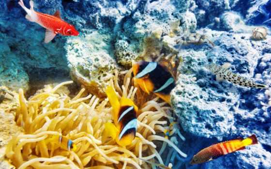 underwater, ultra, world, риф, pisces, coral, uploaded, zoom, компьютерного,