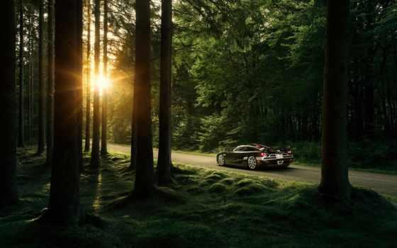 авто, автомобили, лес, лесу, чёрное, форествер, картинка,
