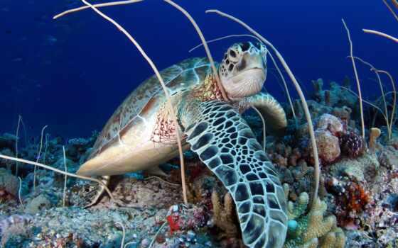 черепаха, море, underwater, animal, world, космос