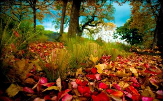 осень, листва, деревья