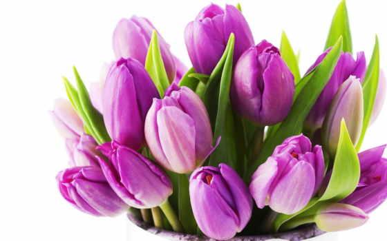 тюльпаны, цветы, красивые